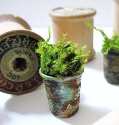 a thimble fairie planter for a garden I know of... @Manderly Ringor