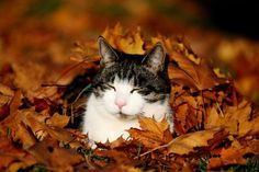 állatok őszi avarban