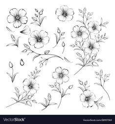 Set linum flower elements collection flax vector image on VectorStock Flower Tattoo Drawings, Flower Tattoo Designs, Drawings Of Flowers, Little Flower Tattoos, Flower Drawing Tutorials, Flower Sketches, Mini Tattoos, Small Tattoos, Tatoo Floral