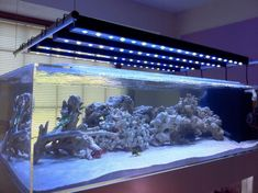A complete guide for all your fish tank lighting needs, Choose the best lighting and what kind of lighting your need in your home aquarium with our full and complete aquarium lighting guide. Aquarium Led, Led Aquarium Lighting, Home Aquarium, Aquarium Design, Plant Lighting, Planted Aquarium, Aquarium Ideas, Lighting Setups, Shop Lighting
