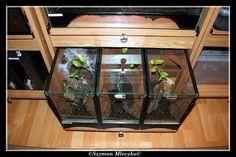 Enclosure/Terrarium Pictures - Page 21