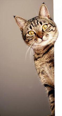 #gatti