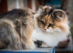 Fluffy -