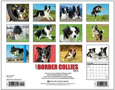 Grange Co-op: Just Border Collies 2015 Calendar
