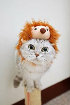 Kitties need weird hats just like people do.