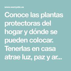 Conoce las plantas protectoras del hogar y dónde se pueden colocar. Tenerlas en casa atrae luz, paz y armonía. Aprovecha sus beneficios