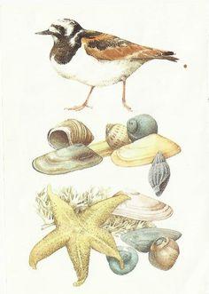 *MB! Wildlife Paintings, Nature Paintings, Beach Artwork, Cool Artwork, Scratchboard Art, Marjolein Bastin, Nature Artists, Dutch Artists, Illustration Sketches