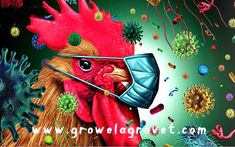 Biosecurity in Poultry Farming – Growel Agrovet Poultry Farming, Raising Chickens