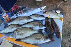 Another good day near Karratha Western Australia, Fishing, Places, Peaches, Pisces, Lugares, Gone Fishing