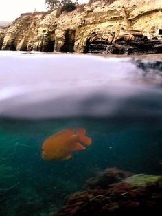 One of this year's Underwater Parks Day photo contest winners.