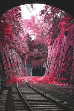 Beautiful landscapes - La Petite Ceinture an abandoned railway line circling Paris × Nature Pictures, Cool Pictures, Beautiful Pictures, Amazing Photography, Landscape Photography, Nature Photography, Newborn Photography, Photography Sketchbook, Pinterest Photography