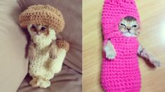 Your Morning Cry: Injured Kitten's Life Was Saved By Crocheted Rehab This cat.  I needed this today.