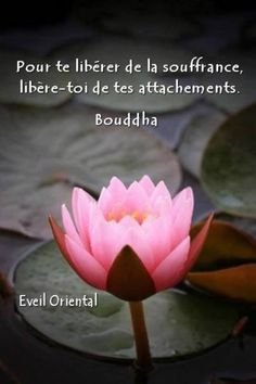 Pour te liberer de la souffrance libere-toi de tes attachements ~ Free yourself of suffering by freeing yourself of attachments. Positive Energy Quotes, Positive Attitude, Positive Affirmations, Positive Thoughts, Insightful Quotes, Inspirational Quotes, Leiden, Wisdom Quotes, Me Quotes