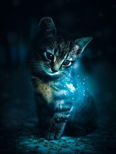 Cute Animal Drawings Kawaii, Cute Cartoon Animals, Cute Little Animals, Pretty Cats, Beautiful Cats, Animals Beautiful, Baby Animals Pictures, Cute Animal Photos, Cute Cat Wallpaper