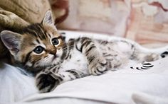 Things that make you go AWW! Like puppies, bunnies, babies, and so on. A place for really cute pictures and videos! Cute Kittens, Cute Kitten Gif, Cats And Kittens, Kittens Meowing, Baby Cats, Kitten Wallpaper, Animal Wallpaper, Pretty Cats, Beautiful Cats