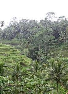 Bali bliss.
