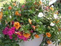 Hanging basket ideas! #smithscountrygardens #hangingbaskets #gardens #flowers Basket Ideas, Hanging Baskets, Gardens, Country, Flowers, Plants, Fall Hanging Baskets, Rural Area, Outdoor Gardens