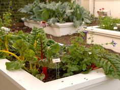 The experts at HGTV.com share raised bed gardens for all levels of gardeners.