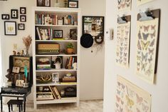 White bookshelf // contemporary cabinet of curiosities with butterflies, beetles, and oddities