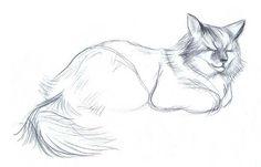 Наброски и зарисовки животных