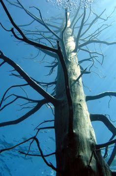 Lake Traful - submerged forest of Patagonia - 07