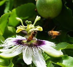 bijen v/d Natuur  Help jij de bijen ook?