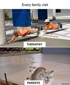 Memes funny lol humor hilarious 62 New Ideas Funny Meme Pictures, Funny Cat Memes, Funny Animal Pictures, Funny Relatable Memes, Funny Images, Funny Animals, Cute Animals, Funny Humor, Memes Humor