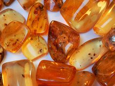 Amber with Insect Inclusions