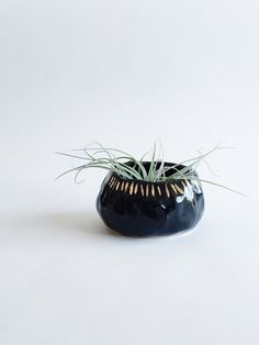arrow + sage organic desktop planter in black and gold