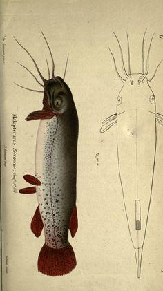 Various Plates: Reptiles,Poissons,Crustaces,Annelides, Arachnides, Zoophytes - Magasin de zoologie. - Biodiversity Heritage Library