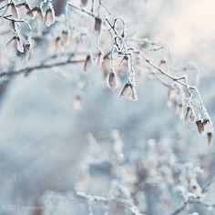 winter wonderland//