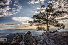 Mountain Light by LarryBarrett  Arizona Mt. Lemmon mountains sky sunrise tucson blue clouds mountain sun trees Mountain Light LarryB