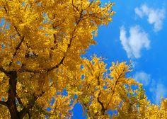 Nature Photography - Autumn Decor - Home Decor - Autumn Leaves - Fall Decor - Harvest Decor - Seasonal Decor - Wall Decor - Original Artwork