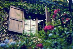 Plantas emolduram a janela