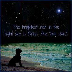 "The brightest star in the night sky is SIRIUS.....the ""dog star""."