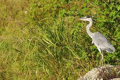 Birds Will Be Birds: 3 Motion GIFs from Kin Dam