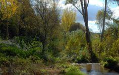 El riu Tenes (Bigues i Riells)
