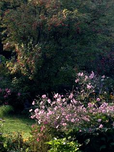 unkraut aus dem vorgarten fernhalten bergenien pflanzen mein garten pinterest unkraut. Black Bedroom Furniture Sets. Home Design Ideas