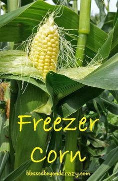 How To Freeze Fresh Sweet Corn