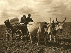 Images from Romanian village patriarchal former - Ox Cart (Dobrogea) Love Img, Romania People, Old Photography, Cultural Diversity, Cowboy And Cowgirl, Medieval, The Past, Pictures, Animals