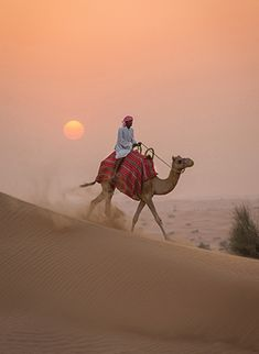 Embark on a safari tour in the desert just outside of Dubai.