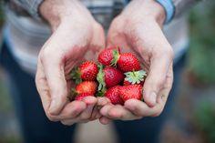 —Strawberries