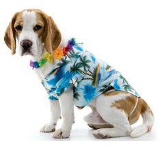 dog fashion show ideas | Moxie Fab Fashion Show for Fido