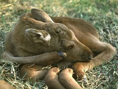 and ADORABLE. | Important PSA: Baby Moose Are Insanely Precious