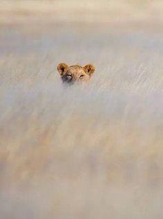 Peek a boo 👀