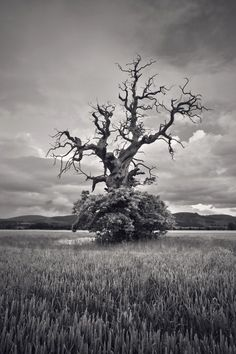 Barbarian tree Photo by David Gibala -- National Geographic Your Shot