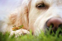 I Love My Dog's Nose | Bored Panda