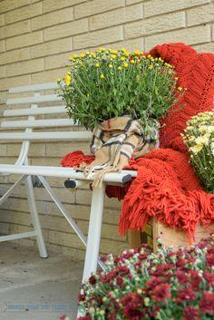 Fall Front Porch Ideas | #InspirationSpotlight