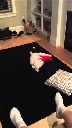 the best dog humping video you'll ever see #Followme #CooliPhone6Case on #Twitter #Facebook #Google #Instagram #LinkedIn #Blogger #Tumblr #Youtube