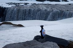 The competition in April for a free rental car in Iceland was as fun as ever. Driving in Iceland and taking pics of the Great Auk seems to bring great joy for so many! Thank you all #FreeRentalCar #DrivingInIceland #GoIceland #CarRentalReykjavik #GreatAuk